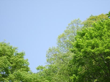 2011_0521_010